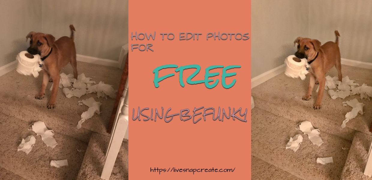How to Edit Photos for FREE Using Befunky